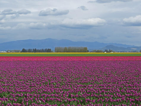 Springtime in La Conner, Washington State